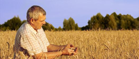 Dagro: Cereales Ecológicos